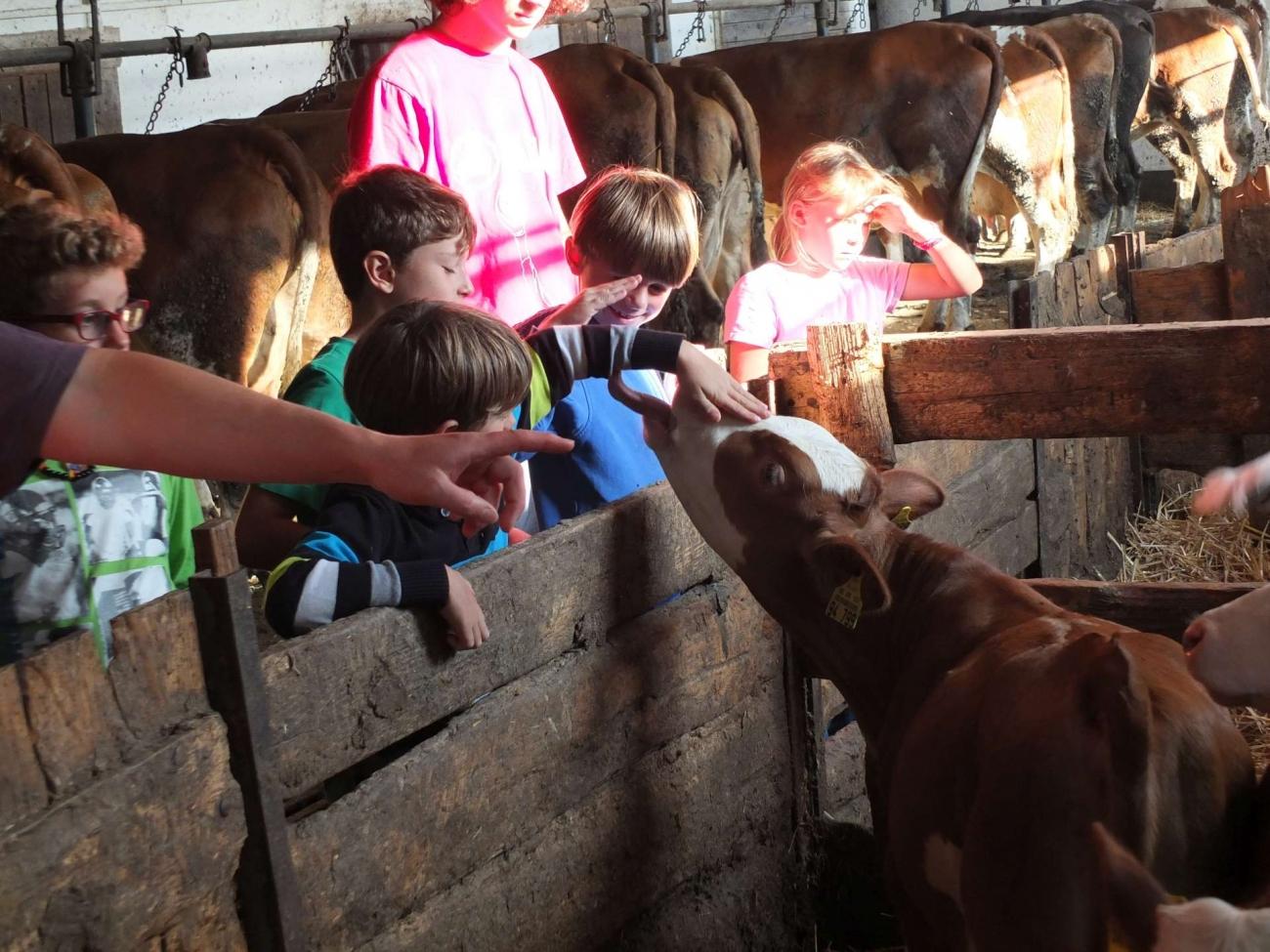 2015-kindersommerfreizeit_236